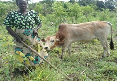 agribusiness-lucy akot