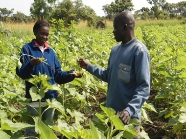 agribusiness-pest diseases